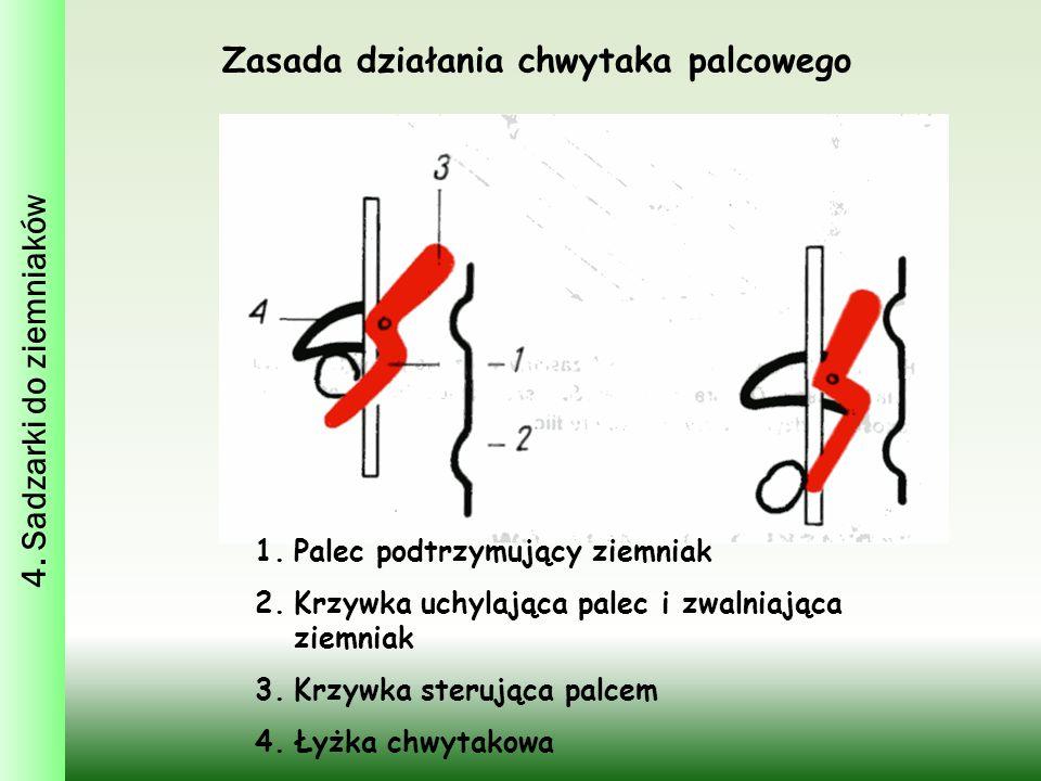 Zasada działania chwytaka palcowego 4. Sadzarki do ziemniaków 1.Palec podtrzymujący ziemniak 2.Krzywka uchylająca palec i zwalniająca ziemniak 3.Krzyw
