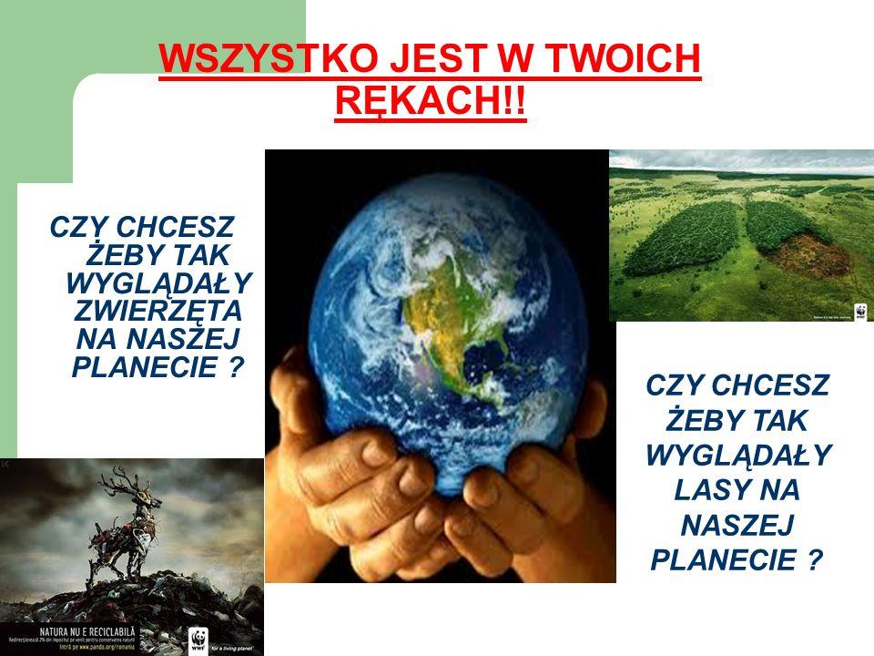 WSZYSTKO JEST W TWOICH RĘKACH!! CZY CHCESZ ŻEBY TAK WYGLĄDAŁY ZWIERZĘTA NA NASZEJ PLANECIE ? CZY CHCESZ ŻEBY TAK WYGLĄDAŁY LASY NA NASZEJ PLANECIE ?