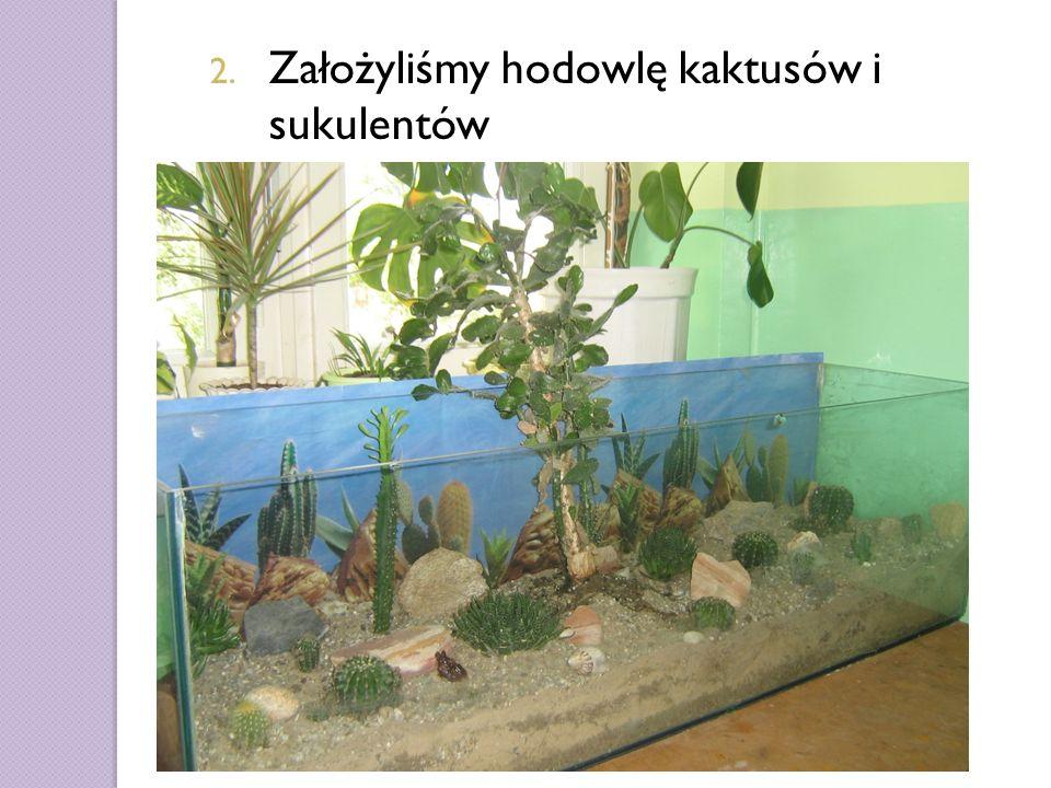 2. Założyliśmy hodowlę kaktusów i sukulentów