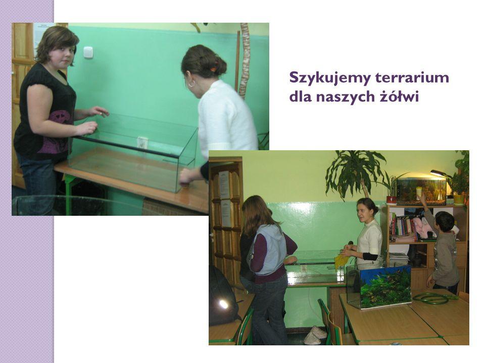 Szykujemy terrarium dla naszych żółwi