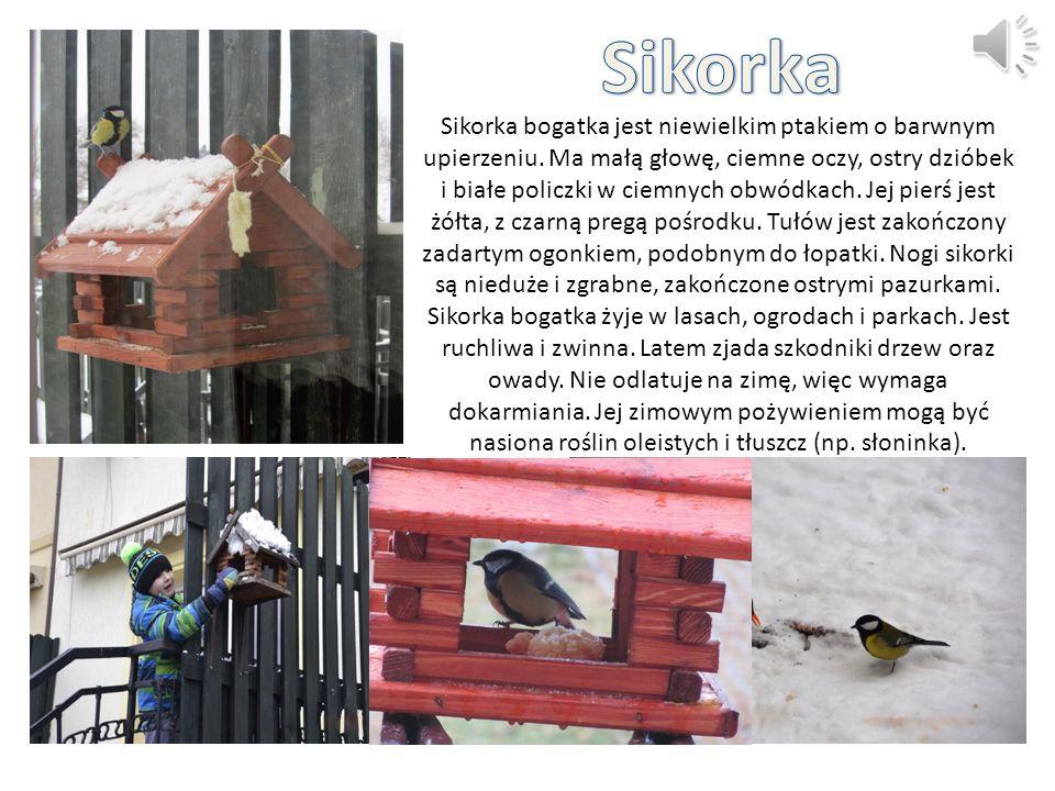 Sikorka bogatka jest niewielkim ptakiem o barwnym upierzeniu. Ma małą głowę, ciemne oczy, ostry dzióbek i białe policzki w ciemnych obwódkach. Jej pie