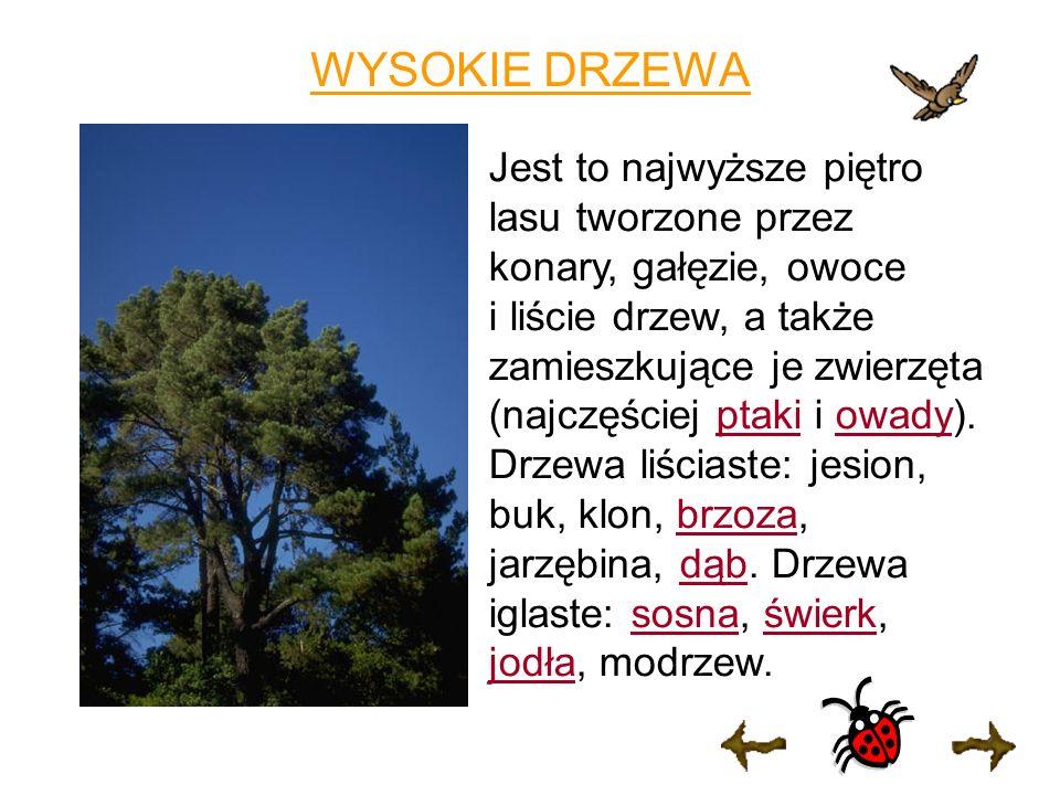 WYSOKIE DRZEWA Jest to najwyższe piętro lasu tworzone przez konary, gałęzie, owoce i liście drzew, a także zamieszkujące je zwierzęta (najczęściej ptaki i owadyowady).