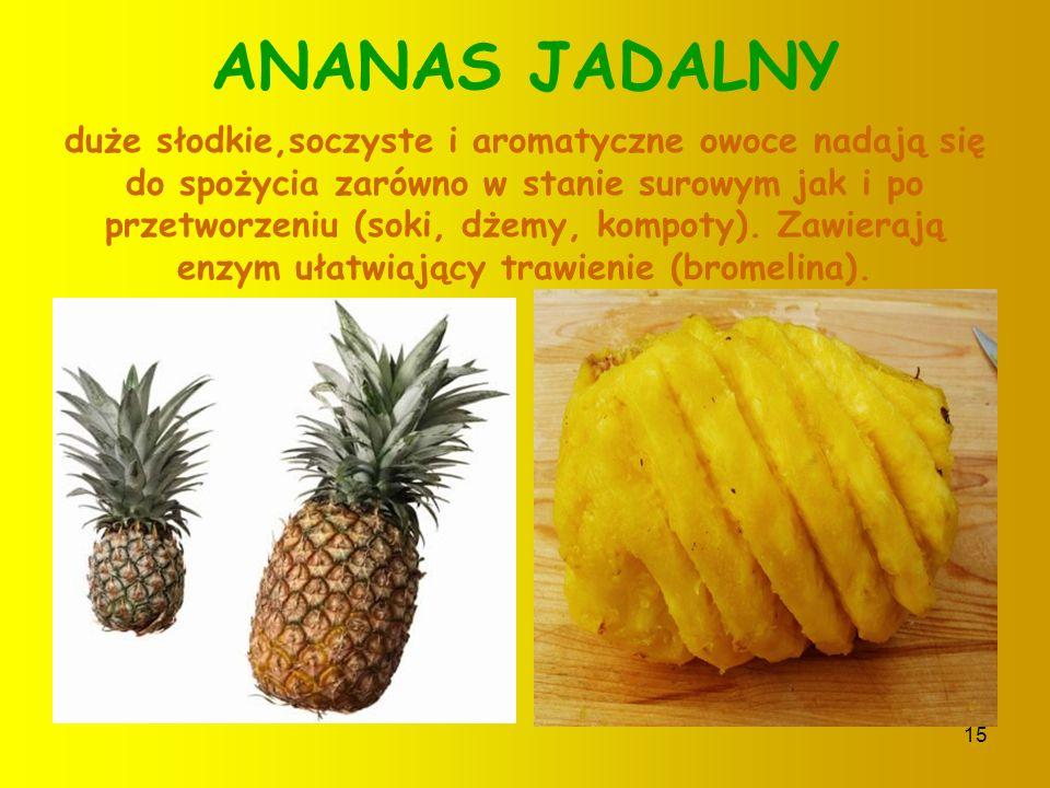 14 PAPAYA Długi,owalny tropikalny owoc.