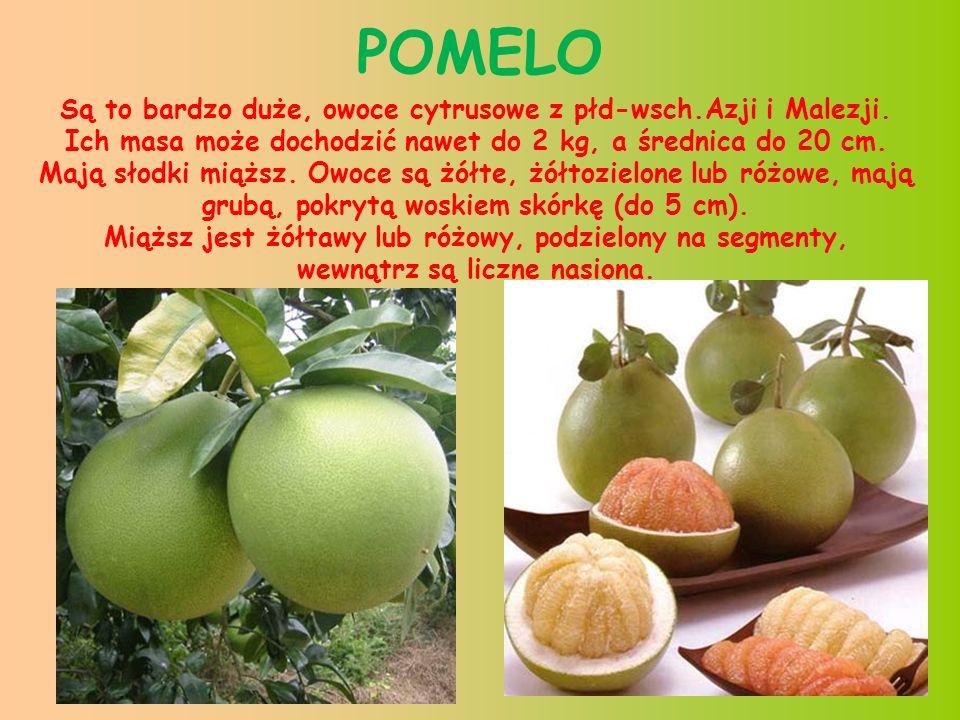 15 ANANAS JADALNY duże słodkie,soczyste i aromatyczne owoce nadają się do spożycia zarówno w stanie surowym jak i po przetworzeniu (soki, dżemy, kompoty).
