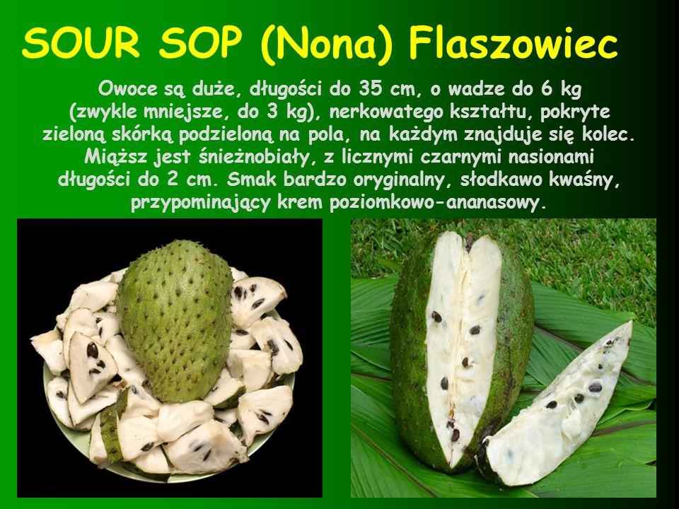 17 RAMBUTAN Owoc ma kształt jajowaty, około 3 cm średnicy i czerwoną, pokrytą kolcami skorupkę.