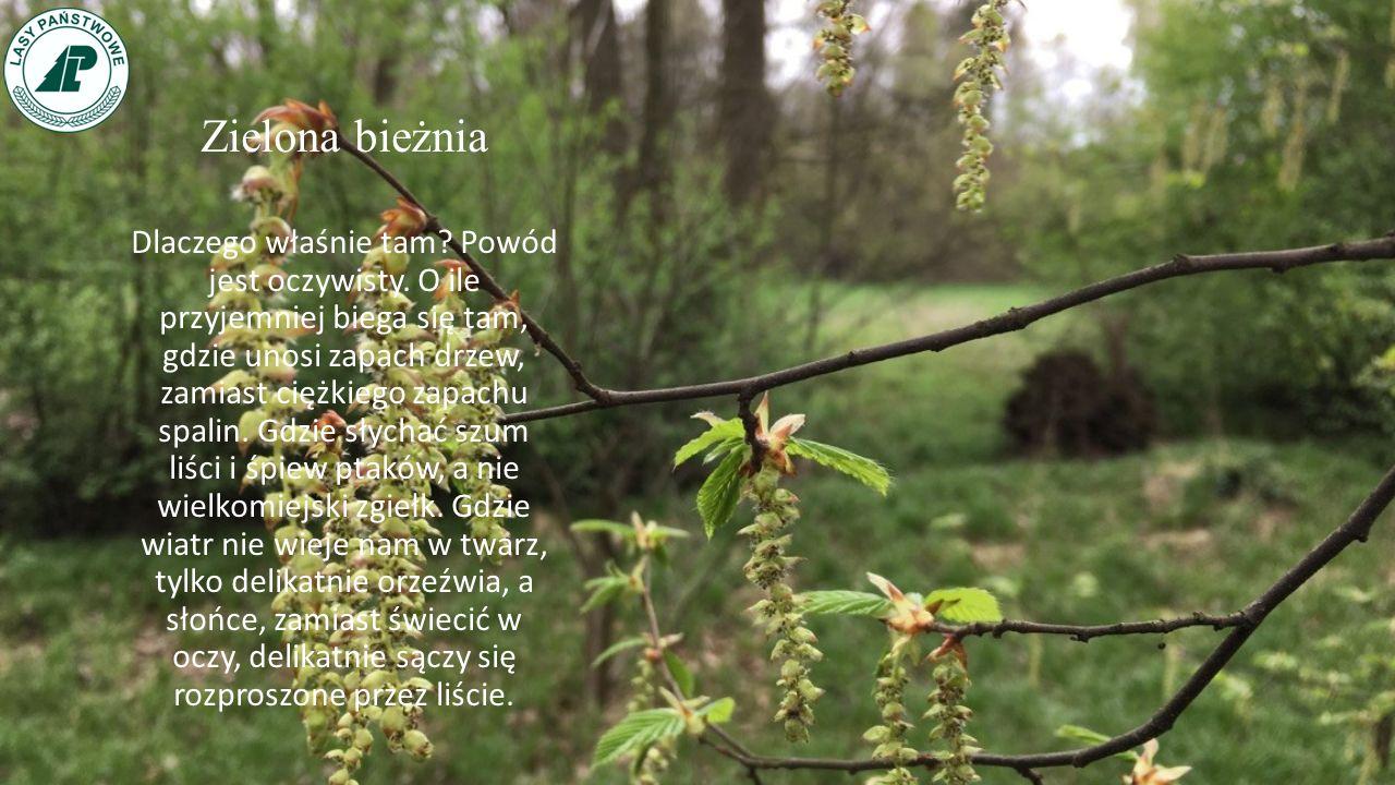 Zalety lasu - Bieganie Bieganie to dziś, obok jazdy na rowerze, najpopularniejszy sport uprawiany przez Polaków.