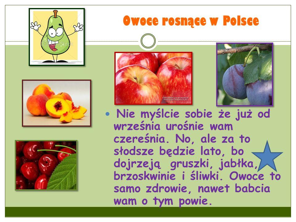 Owoce rosnące w Polsce Nie myślcie sobie że już od września urośnie wam czereśnia. No, ale za to słodsze będzie lato, bo dojrzeją gruszki, jabłka, brz