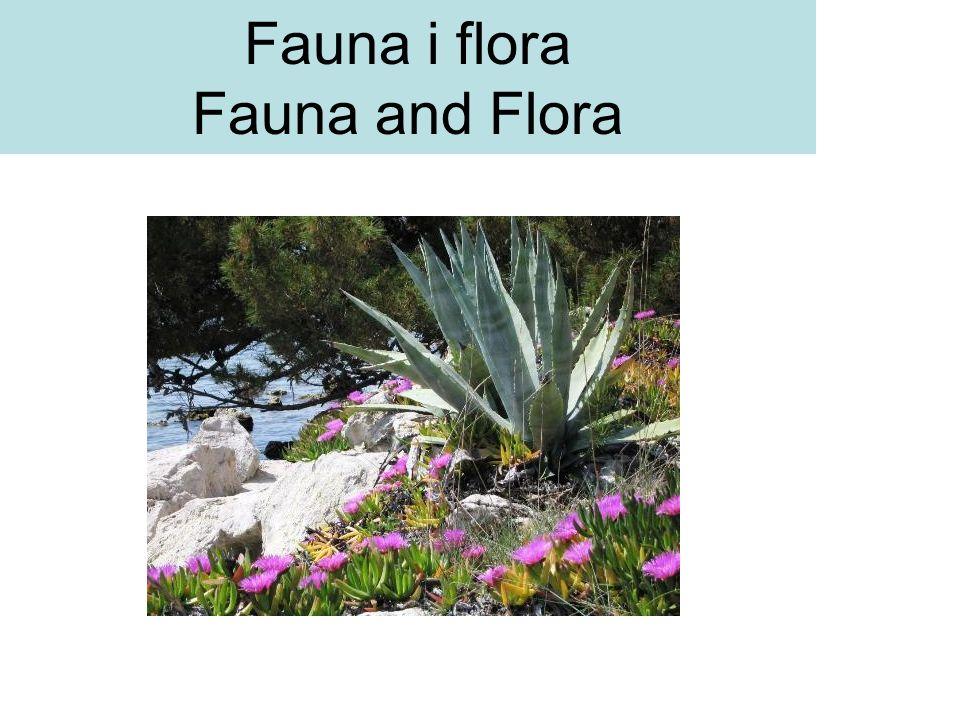 Fauna i flora Fauna and Flora
