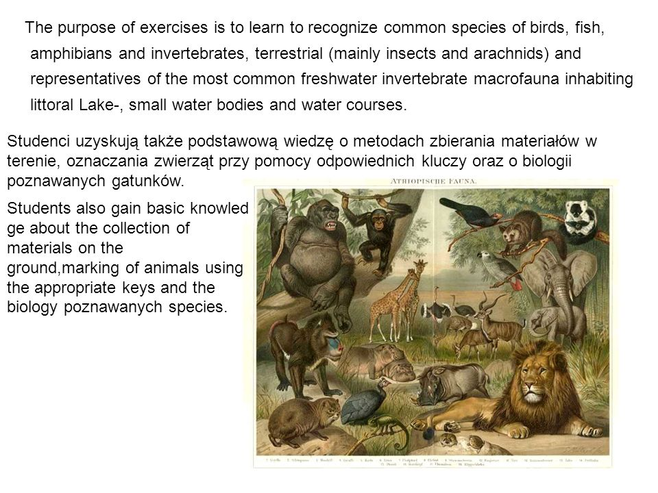 The purpose of exercises is to learn to recognize common species of birds, fish, amphibians and invertebrates, terrestrial (mainly insects and arachni