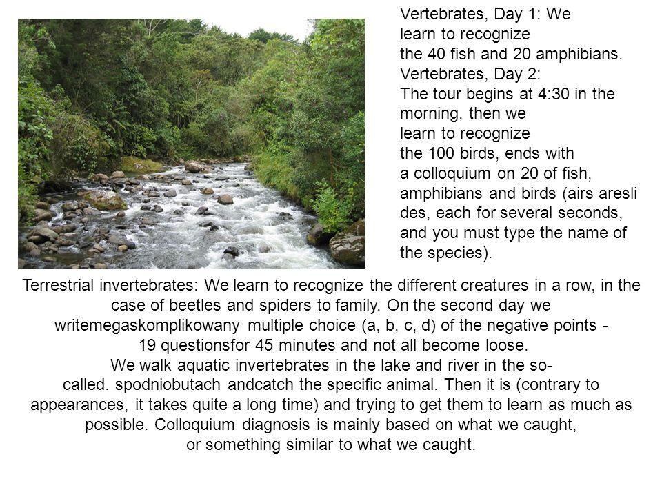 FLORA Trwa 5 dni, każdego dnia mamy wycieczkę na inne siedlisko (las, woda, torfowisko, łąka i synantropy) i zrywamy roślinki do bukietu.