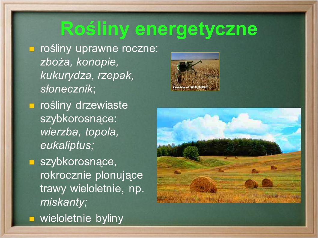 Rośliny energetyczne rośliny uprawne roczne: zboża, konopie, kukurydza, rzepak, słonecznik; rośliny drzewiaste szybkorosnące: wierzba, topola, eukaliptus; szybkorosnące, rokrocznie plonujące trawy wieloletnie, np.
