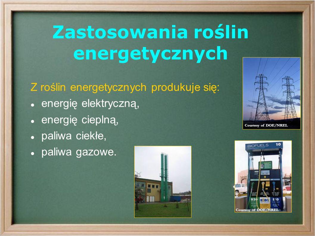 Zastosowania roślin energetycznych Z roślin energetycznych produkuje się: energię elektryczną, energię cieplną, paliwa ciekłe, paliwa gazowe.