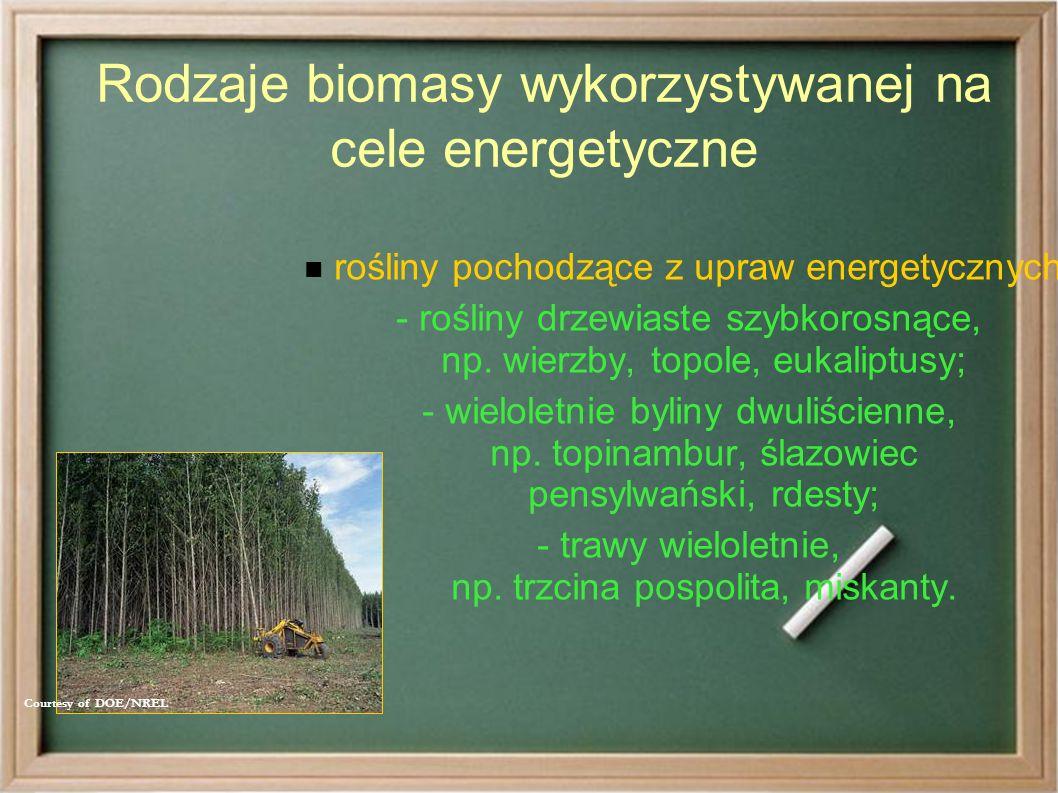 Rodzaje biomasy wykorzystywanej na cele energetyczne rośliny pochodzące z upraw energetycznych: - rośliny drzewiaste szybkorosnące, np.