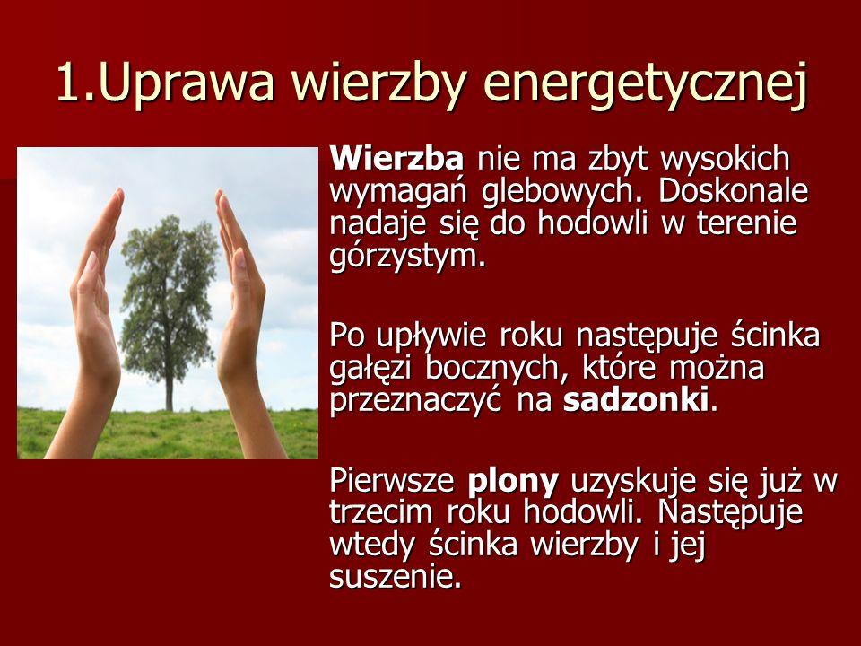 1.Uprawa wierzby energetycznej Wierzba nie ma zbyt wysokich wymagań glebowych.