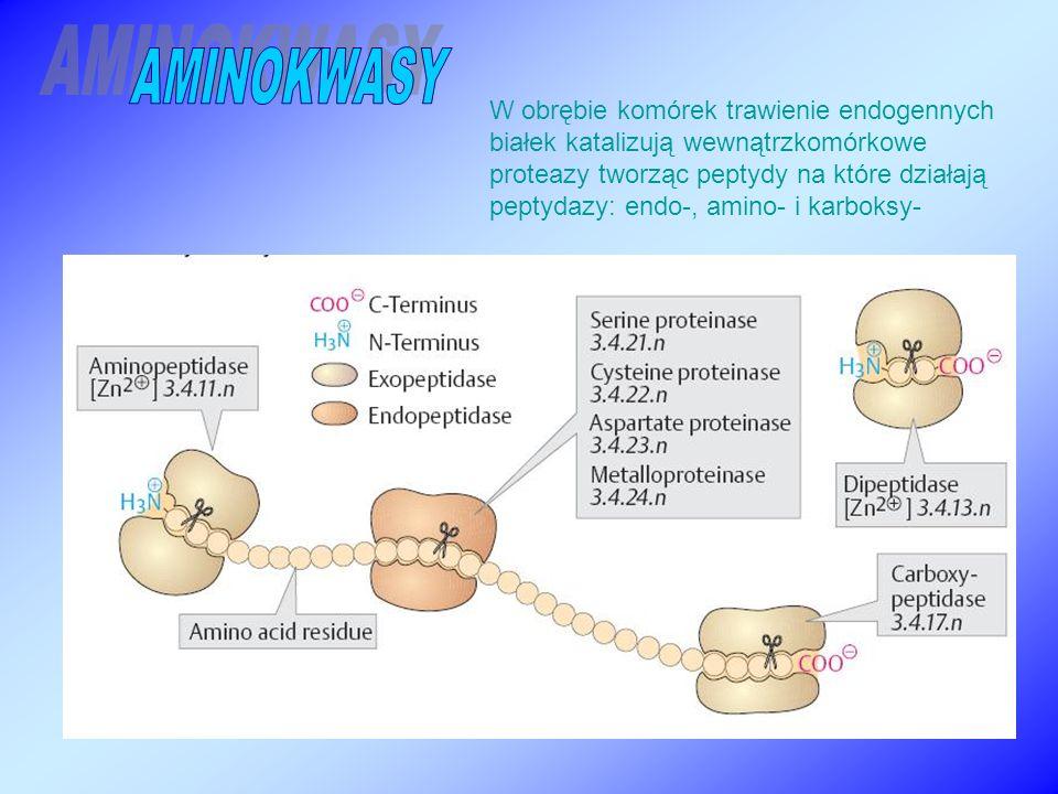 W obrębie komórek trawienie endogennych białek katalizują wewnątrzkomórkowe proteazy tworząc peptydy na które działają peptydazy: endo-, amino- i karboksy-