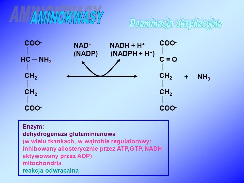 COO -  C = O  CH 2  CH 2  COO -  HC ─ NH 2  CH 2  CH 2  COO - + Enzym: dehydrogenaza glutaminianowa (w wielu tkankach, w wątrobie regulatorowy: inhibowany allosterycznie przez ATP,GTP, NADH aktywowany przez ADP) mitochondria reakcja odwracalna NH 3 NAD + NADH + H + (NADP) (NADPH + H + )