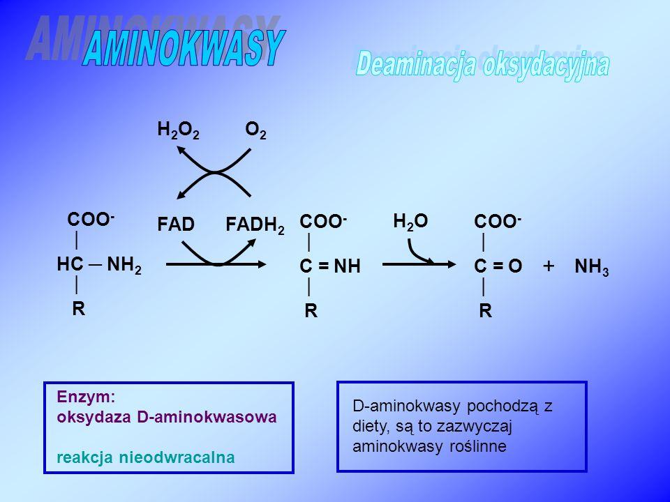 COO -  C = NH  R COO -  HC ─ NH 2  R + Enzym: oksydaza D-aminokwasowa reakcja nieodwracalna NH 3 FAD FADH 2 COO -  C = O  R H2OH2O H 2 O 2 O 2 D-aminokwasy pochodzą z diety, są to zazwyczaj aminokwasy roślinne