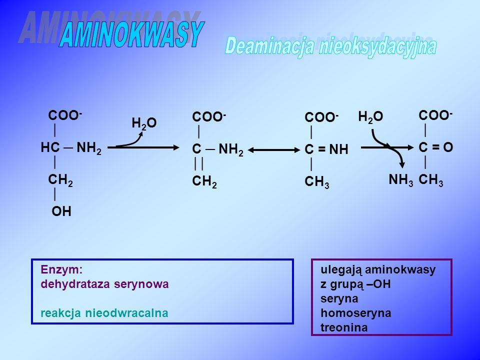 COO -  C ─ NH 2  CH 2 COO -  HC ─ NH 2  CH 2  OH Enzym: dehydrataza serynowa reakcja nieodwracalna NH 3 COO -  C = O  CH 3 H2OH2O H2OH2O COO -  C = NH  CH 3 ulegają aminokwasy z grupą –OH seryna homoseryna treonina