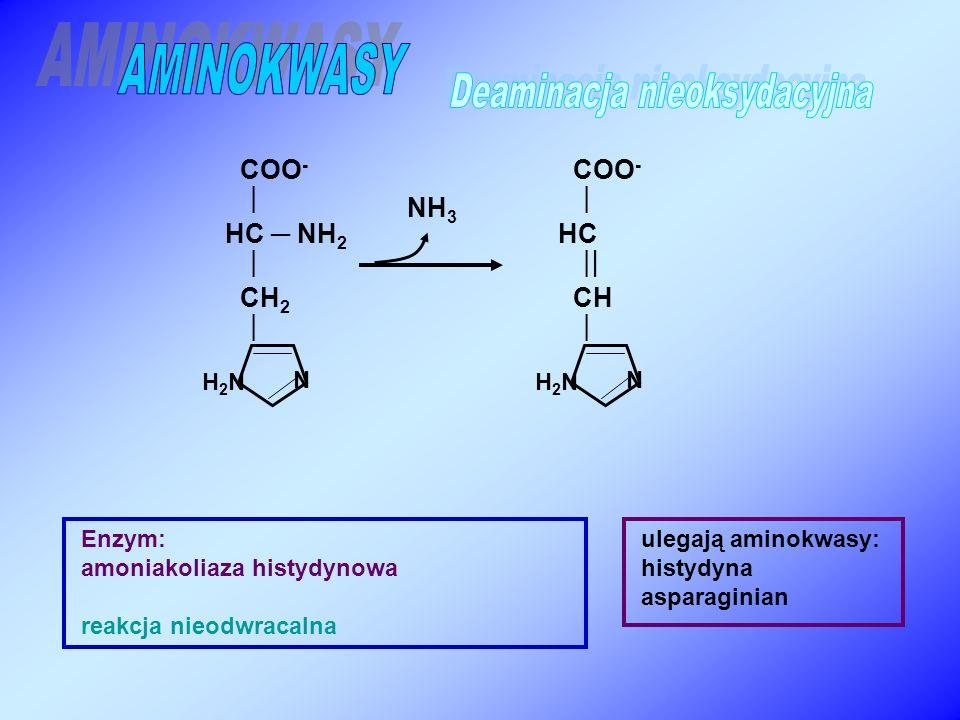 COO -  HC ─ NH 2  CH 2  Enzym: amoniakoliaza histydynowa reakcja nieodwracalna NH 3 ulegają aminokwasy: histydyna asparaginian H2NH2N N COO -  HC  CH  H2NH2N N