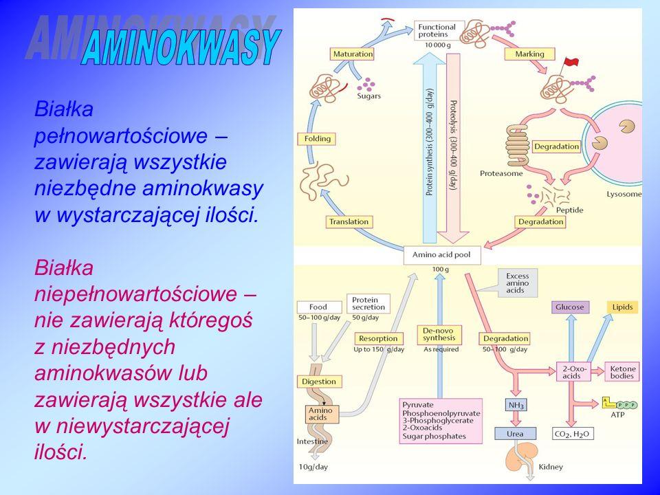 Białka pełnowartościowe – zawierają wszystkie niezbędne aminokwasy w wystarczającej ilości.