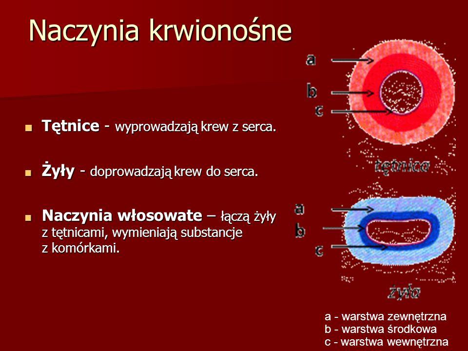 Naczynia krwionośne ■ Tętnice - wyprowadzają krew z serca. ■ Żyły - doprowadzają krew do serca. ■ Naczynia włosowate – łączą żyły z tętnicami, wymieni