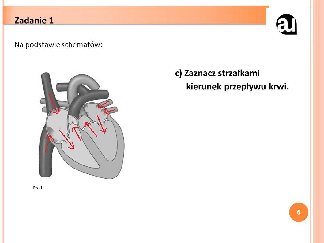 6 Zadanie 1 Na podstawie schematów: c) Zaznacz strzałkami kierunek przepływu krwi. Rys. 3