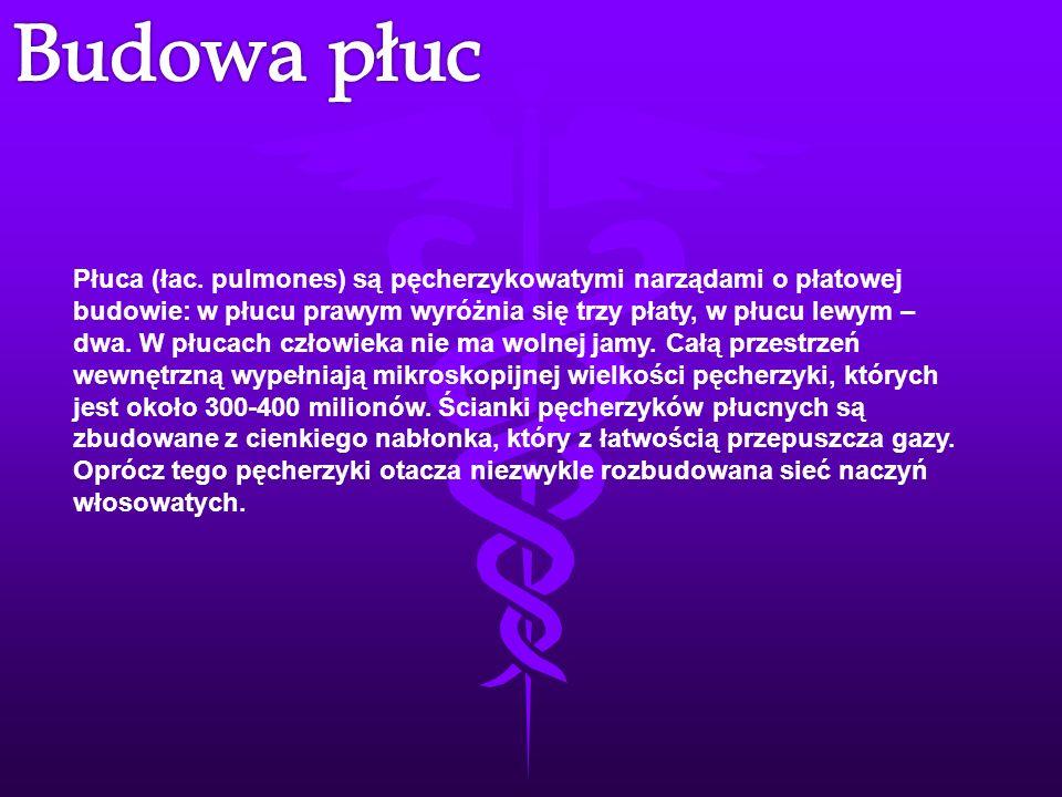Płuca (łac. pulmones) są pęcherzykowatymi narządami o płatowej budowie: w płucu prawym wyróżnia się trzy płaty, w płucu lewym – dwa. W płucach człowie