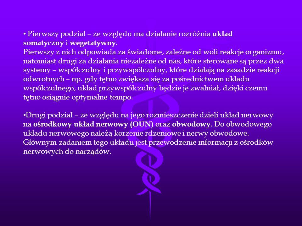 Pierwszy podział – ze względu ma działanie rozróżnia układ somatyczny i wegetatywny. Pierwszy z nich odpowiada za świadome, zależne od woli reakcje or