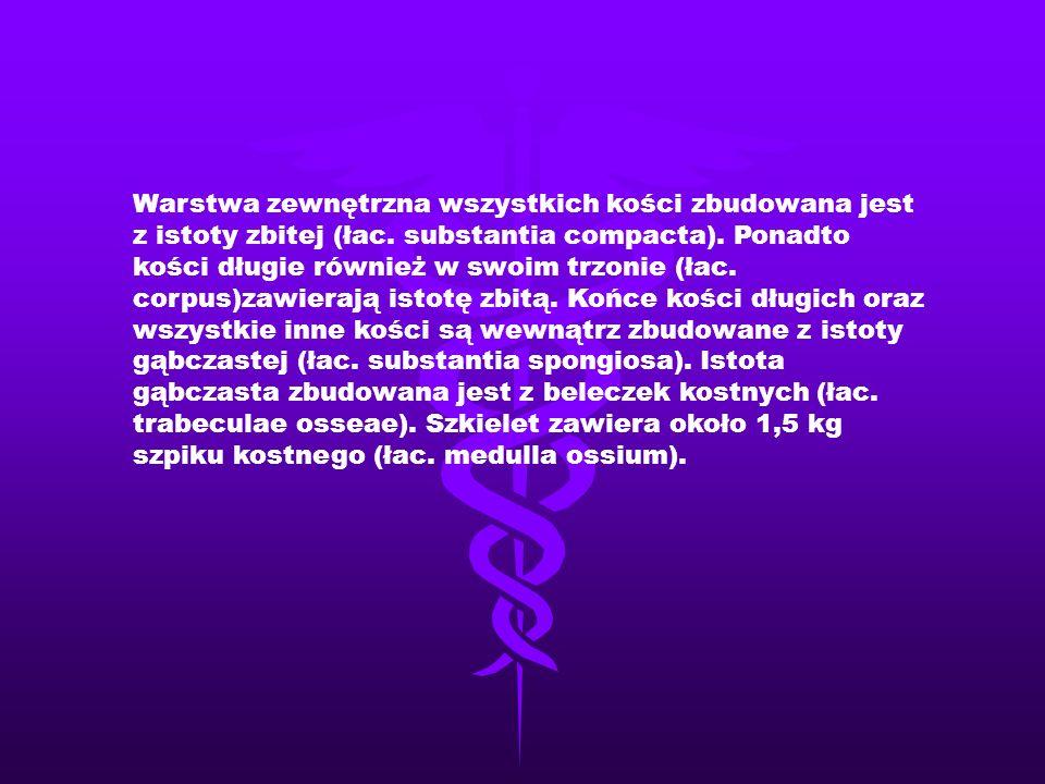 Człowiek, podobnie jak większość kręgowców, zbudowany jest symetrycznie tj.