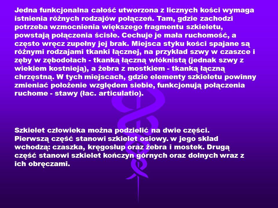  Tchawica (łac.