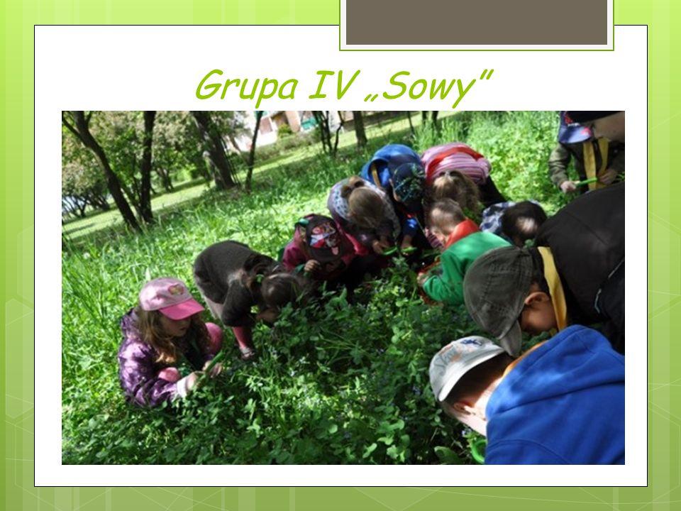 """Grupa IV """"Sowy"""