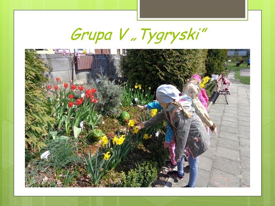 "Grupa V ""Tygryski"