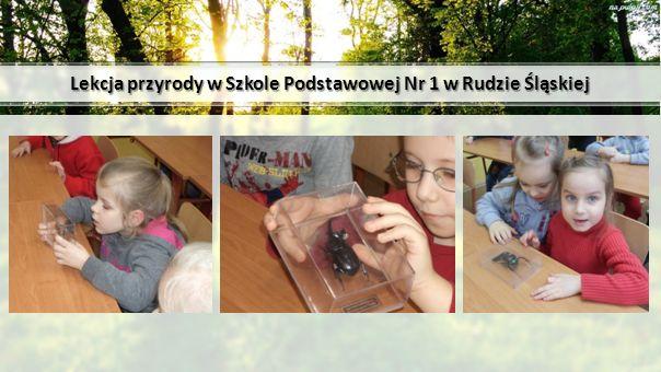 Lekcja przyrody w Szkole Podstawowej Nr 1 w Rudzie Śląskiej