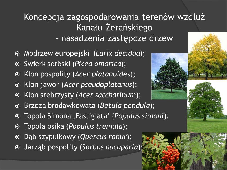 Koncepcja zagospodarowania terenów wzdłuż Kanału Żerańskiego - nasadzenia zastępcze drzew  Modrzew europejski (Larix decidua);  Świerk serbski (Picea omorica);  Klon pospolity (Acer platanoides);  Klon jawor (Acer pseudoplatanus);  Klon srebrzysty (Acer saccharinum);  Brzoza brodawkowata (Betula pendula);  Topola Simona 'Fastigiata' (Populus simoni);  Topola osika (Populus tremula);  Dąb szypułkowy (Quercus robur);  Jarząb pospolity (Sorbus aucuparia);