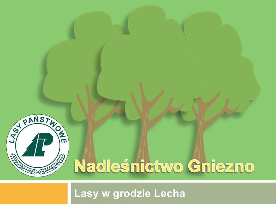 Lasy w grodzie Lecha