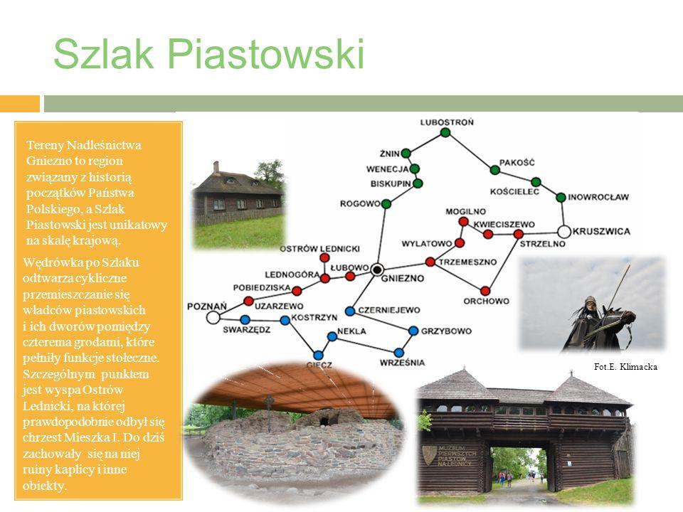 Szlak Piastowski Tereny Nadleśnictwa Gniezno to region związany z historią początków Państwa Polskiego, a Szlak Piastowski jest unikatowy na skalę krajową.