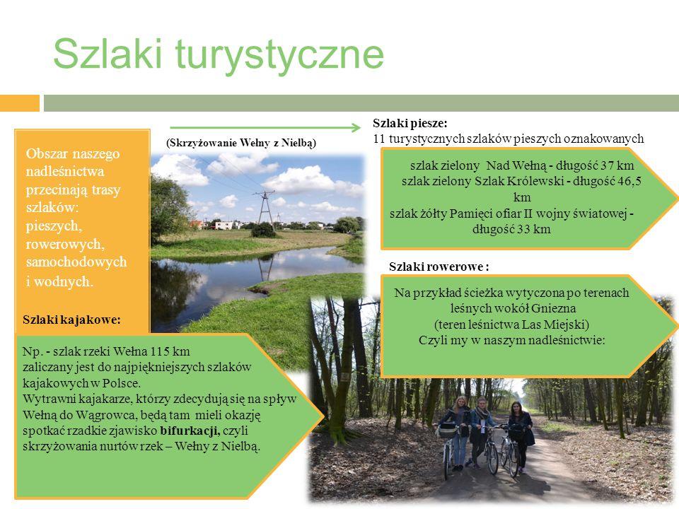 Obszar naszego nadleśnictwa przecinają trasy szlaków: pieszych, rowerowych, samochodowych i wodnych.