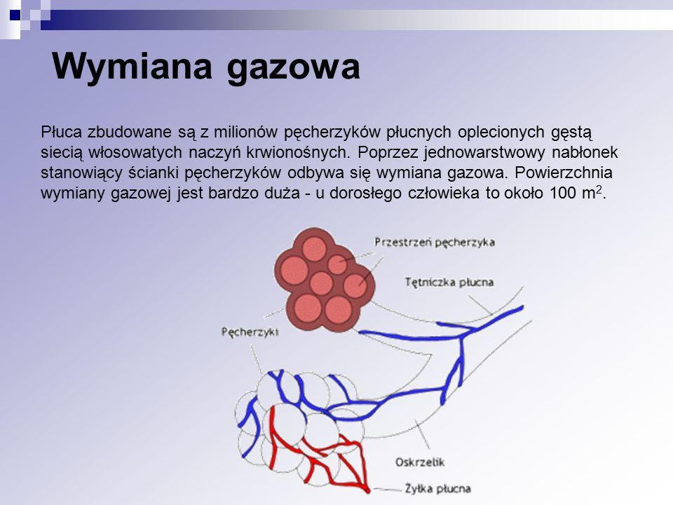 Wymiana gazowa Płuca zbudowane są z milionów pęcherzyków płucnych oplecionych gęstą siecią włosowatych naczyń krwionośnych. Poprzez jednowarstwowy nab