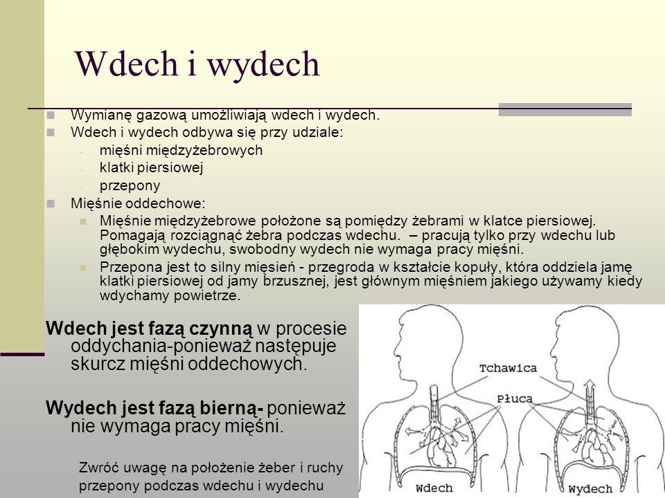Wdech i wydech Wymianę gazową umożliwiają wdech i wydech. Wdech i wydech odbywa się przy udziale: - mięśni międzyżebrowych - klatki piersiowej - przep