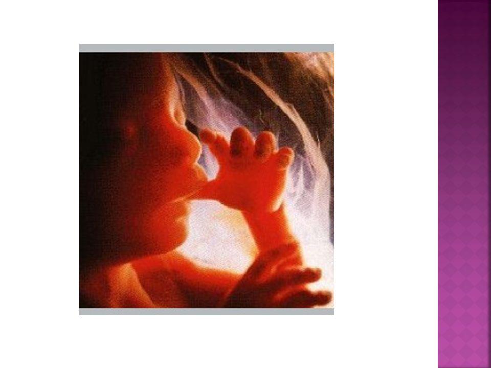 """Niewłaściwa atmosfera emocjonalna wokół dziecka poczętego, jak i negatywne przeżycia matki (przeszłe i aktualne) mogą stworzyć """"stan klęski ekologicznej w łonie , przez co rozwój dziecka i jego życie mogą być zagrożone."""