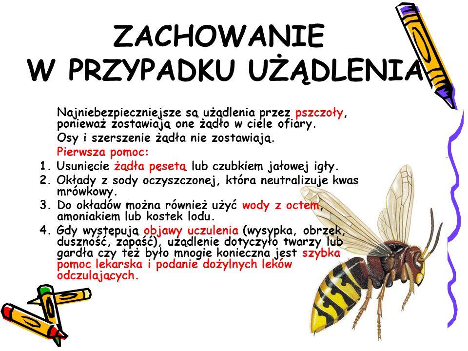 ZACHOWANIE W PRZYPADKU UŻĄDLENIA Najniebezpieczniejsze są użądlenia przez pszczoły, ponieważ zostawiają one żądło w ciele ofiary. Osy i szerszenie żąd