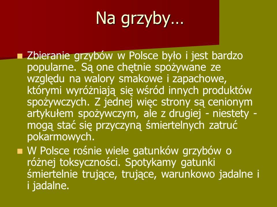 Na grzyby… Zbieranie grzybów w Polsce było i jest bardzo popularne.