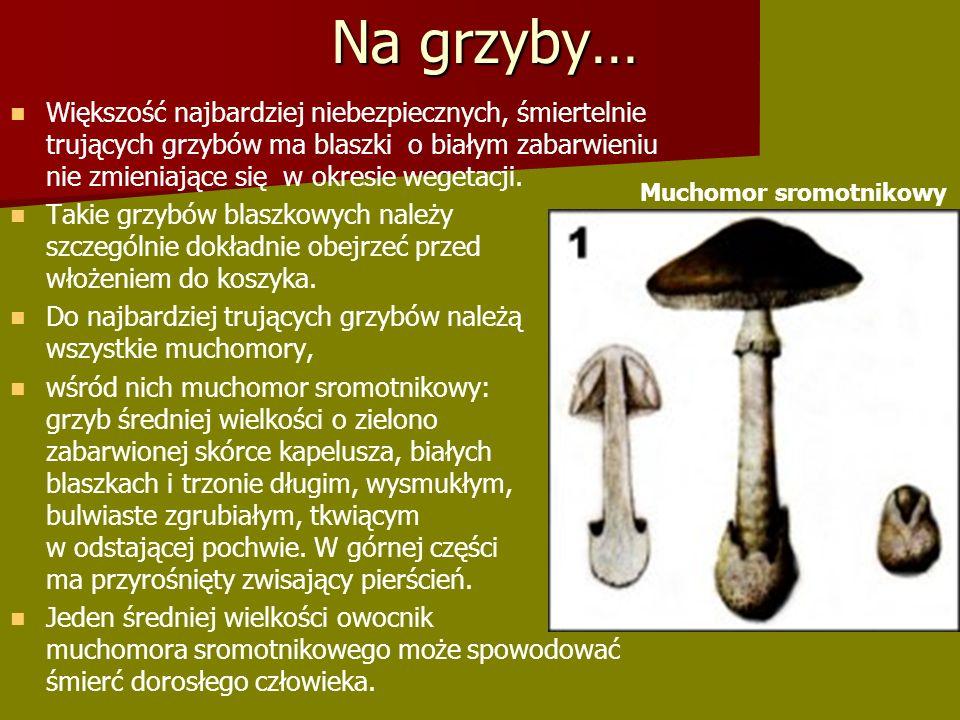 Większość najbardziej niebezpiecznych, śmiertelnie trujących grzybów ma blaszki o białym zabarwieniu nie zmieniające się w okresie wegetacji.