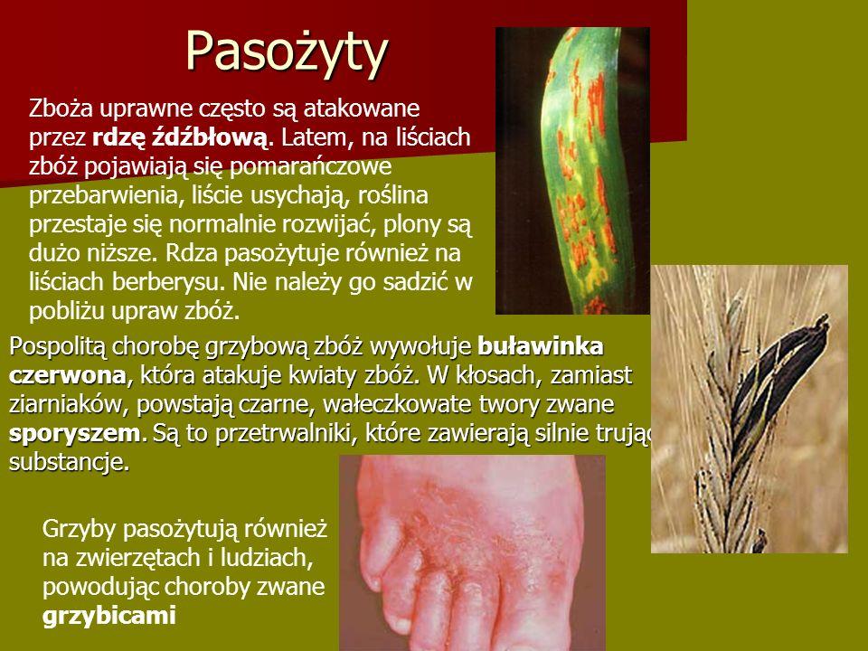 Pasożyty Pospolitą chorobę grzybową zbóż wywołuje buławinka czerwona, która atakuje kwiaty zbóż.