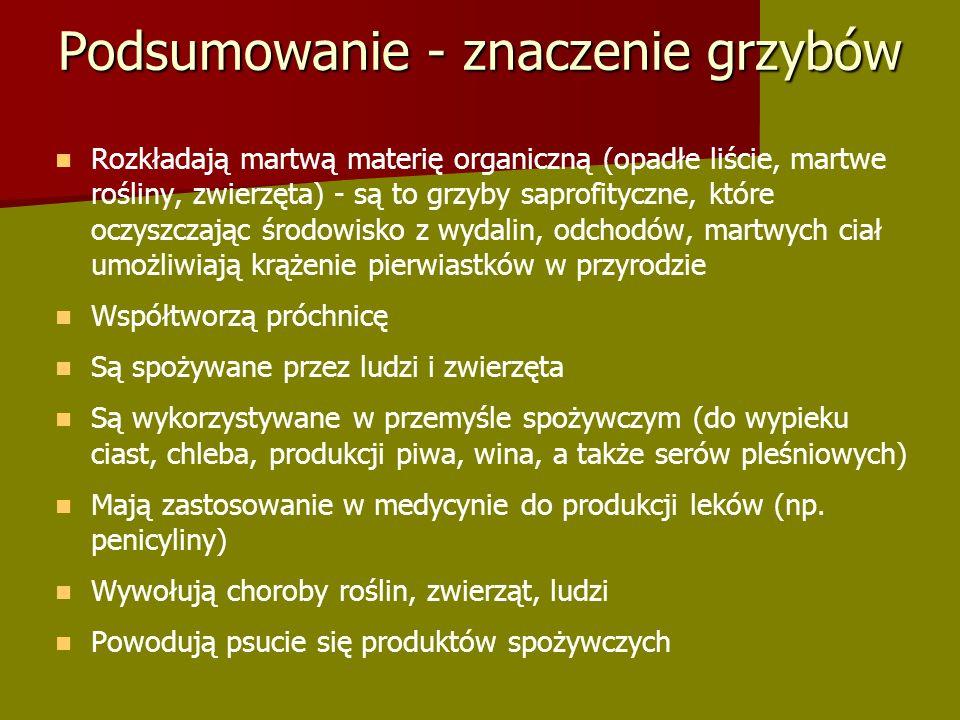 Podsumowanie - znaczenie grzybów Rozkładają martwą materię organiczną (opadłe liście, martwe rośliny, zwierzęta) - są to grzyby saprofityczne, które oczyszczając środowisko z wydalin, odchodów, martwych ciał umożliwiają krążenie pierwiastków w przyrodzie Współtworzą próchnicę Są spożywane przez ludzi i zwierzęta Są wykorzystywane w przemyśle spożywczym (do wypieku ciast, chleba, produkcji piwa, wina, a także serów pleśniowych) Mają zastosowanie w medycynie do produkcji leków (np.