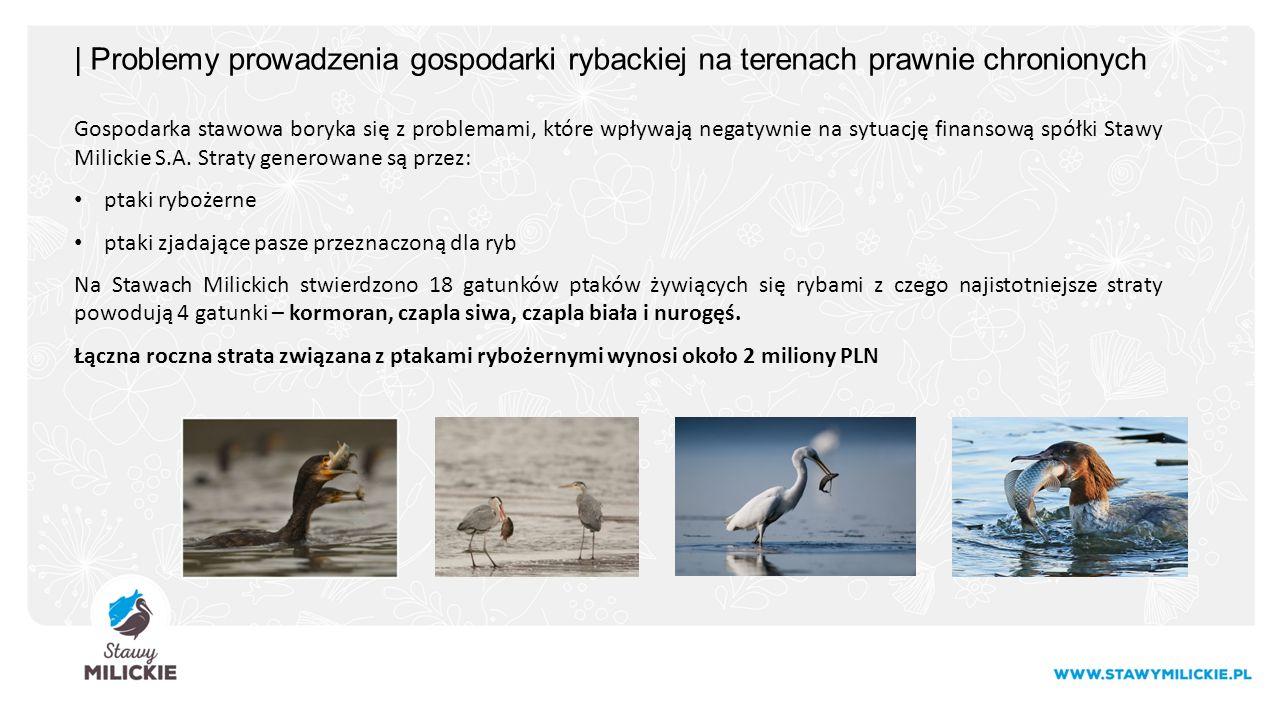 | Problemy prowadzenia gospodarki rybackiej na terenach prawnie chronionych Gospodarka stawowa boryka się z problemami, które wpływają negatywnie na sytuację finansową spółki Stawy Milickie S.A.