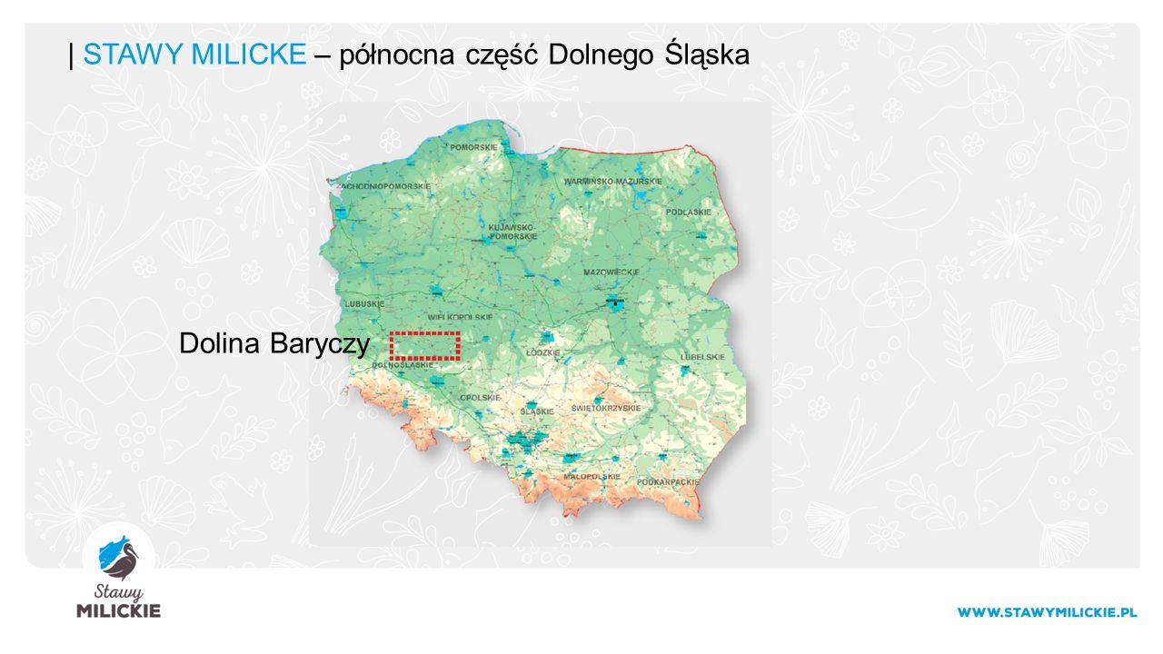 | STAWY MILICKE – północna część Dolnego Śląska Dolina Baryczy