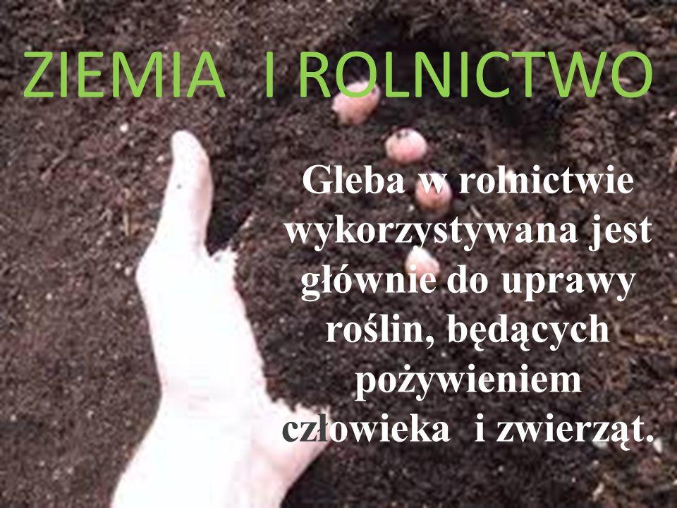 ZIEMIA I ROLNICTWO Gleba w rolnictwie wykorzystywana jest głównie do uprawy roślin, będących pożywieniem człowieka i zwierząt.