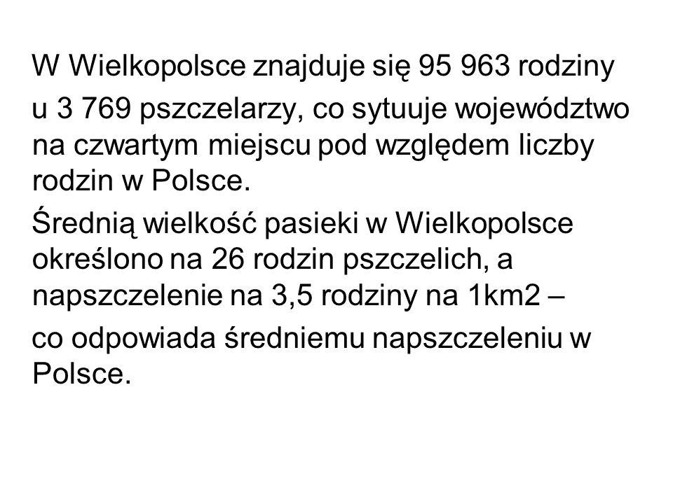 W Wielkopolsce znajduje się 95 963 rodziny u 3 769 pszczelarzy, co sytuuje województwo na czwartym miejscu pod względem liczby rodzin w Polsce. Średni