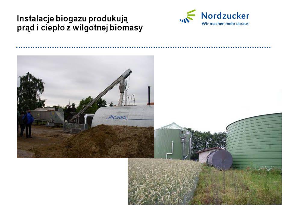 Instalacje biogazu produkują prąd i ciepło z wilgotnej biomasy